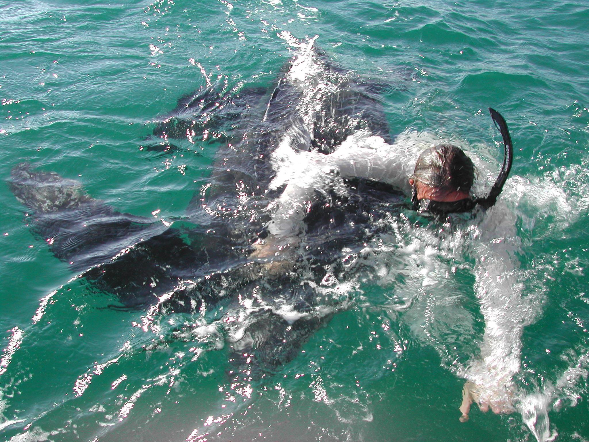 Leatherback Rescue