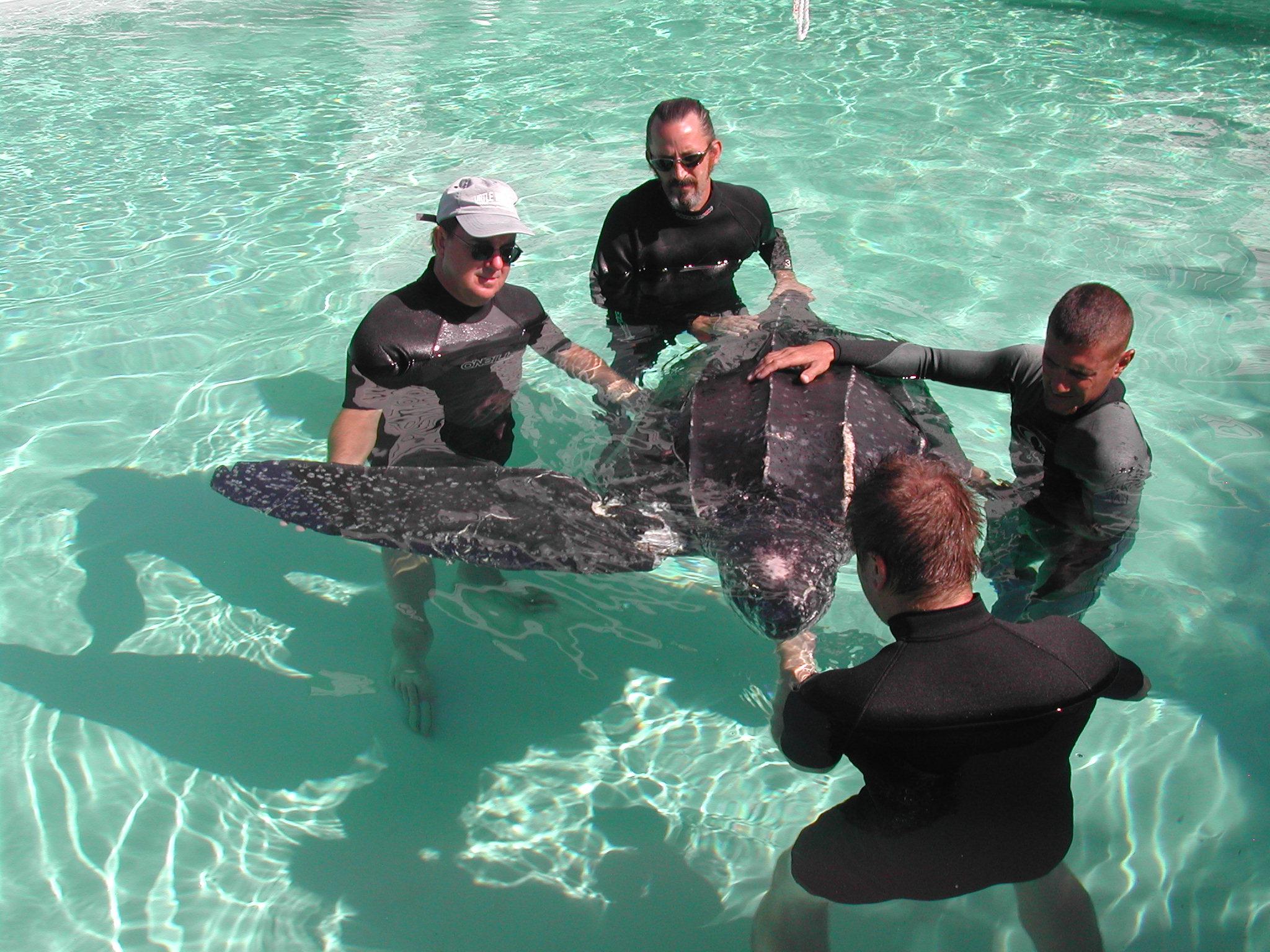 leatherback-rehab-016.jpg