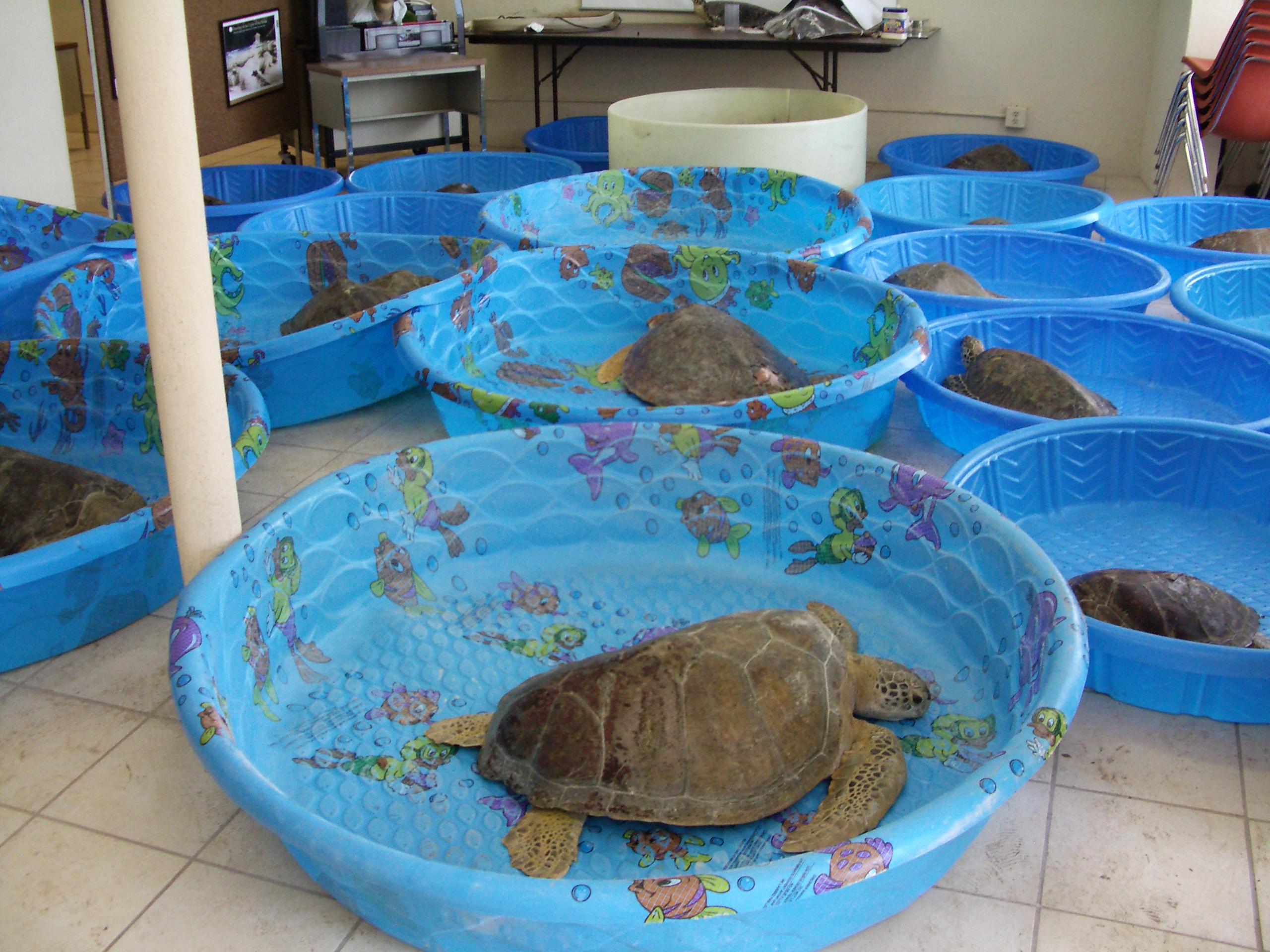 turtles-dry-docked-001.jpg