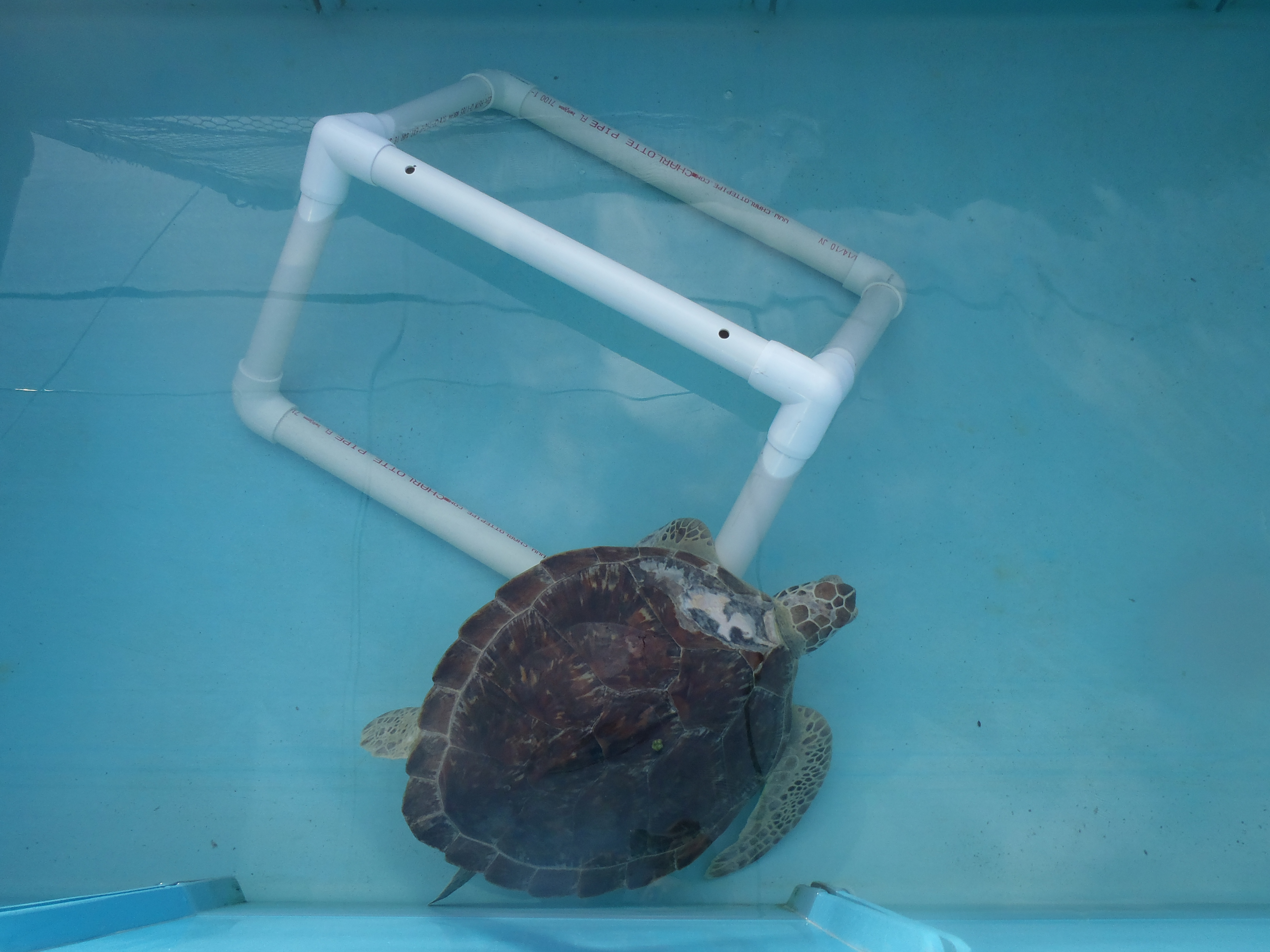 Turtle Toys For Turtles : Turtle toys the hospital rescue rehab release