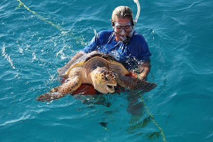 Puffer fish vs puffer the loggerhead the turtle for Blowfish vs puffer fish