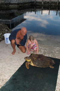 Rescuers, Jack and Grace, observe 'Grace', the turtle.