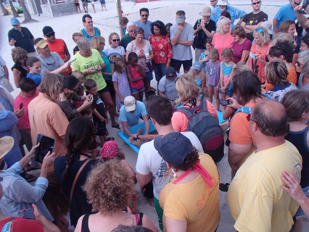 Onlookers listen to Hunter's story and learn how they can protect sea turtles