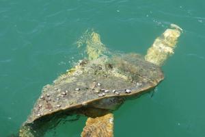 sea-turtle-emergency