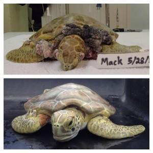 mack transformation