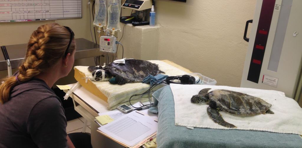Turtles in ER