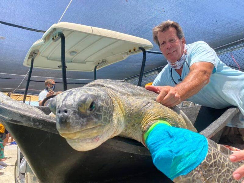 turtle being held