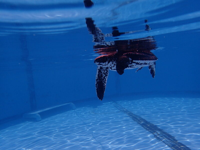 Victor passing swim test